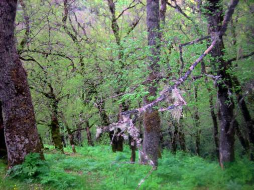 forest-monastiri